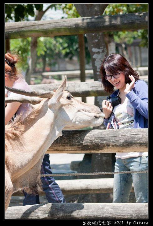 [遊記]驚魂記之這輩子我再也不要趕羚羊與餵食草泥馬了!